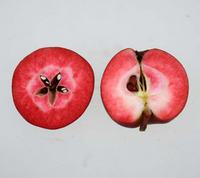 Astrid Apple, red fleshed apple
