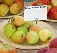 Bodil Neergaard Apples